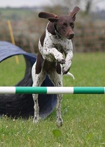 Dog enjoying dog agility classes