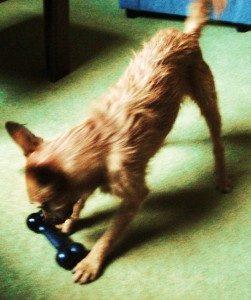 Tigger playing