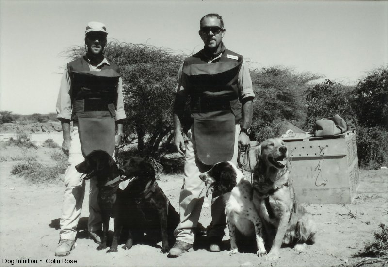 Working with dogs in Somalia